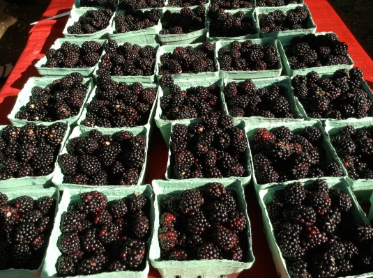 local blackberries